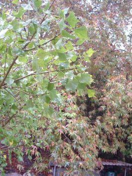 trees-in-november.jpg